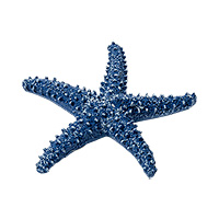 Etoile de Mer Décoration Table Marine