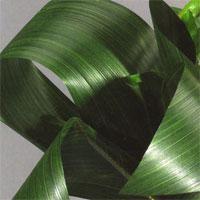 Feuilles Vertes Décoration Florale Artificielle