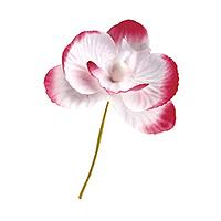 Orchidées Blanc Fuchsia Déco Mariage