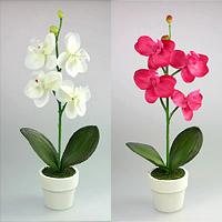 POT Fleur Orchidée pas cher