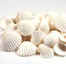 Petits Coquillages Beige Blancs Décoration