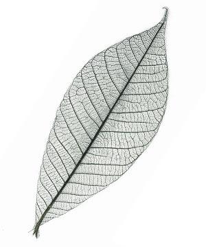 Lot de 50 feuilles d co naturelles et vein es d coration for Feuille de palmier deco