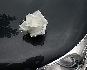 Roses Ventouse Voiture Mariage Blanc