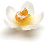 Mini Bougies Orchidées pas cher