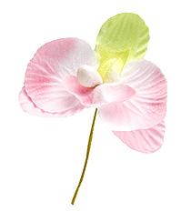 Orchidées Blanc Rose Pastel Déco Mariage Rose Vert Anis