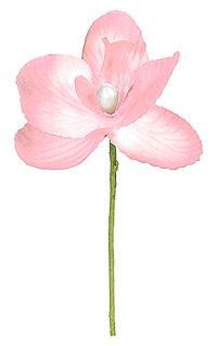 Orchidées Déco Rose