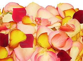 Pétales de Roses Frais Multicolor Mariage
