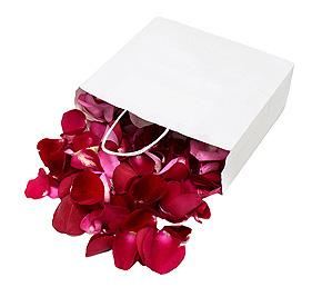 Pétales de roses frais rouge