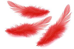 Plumes Longues de Décoration Table Rouge