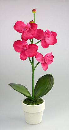 POT Fleur Orchidée pas cher Fuchsia