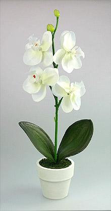 POT Fleur Orchidée pas cher Blanc