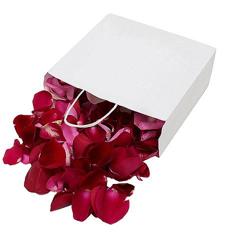 Pétales de roses frais rouge XL